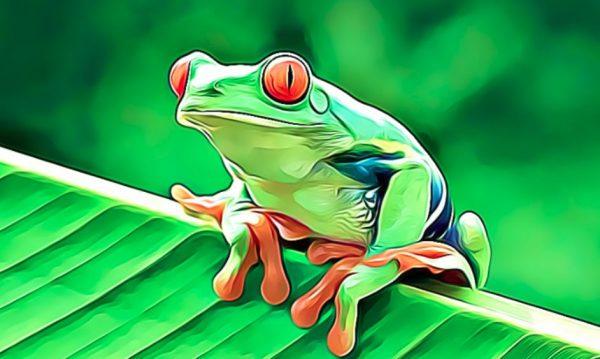 10 caracteristicas de los anfibios