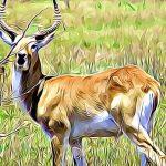 caracteristicas de los animales vertebrados