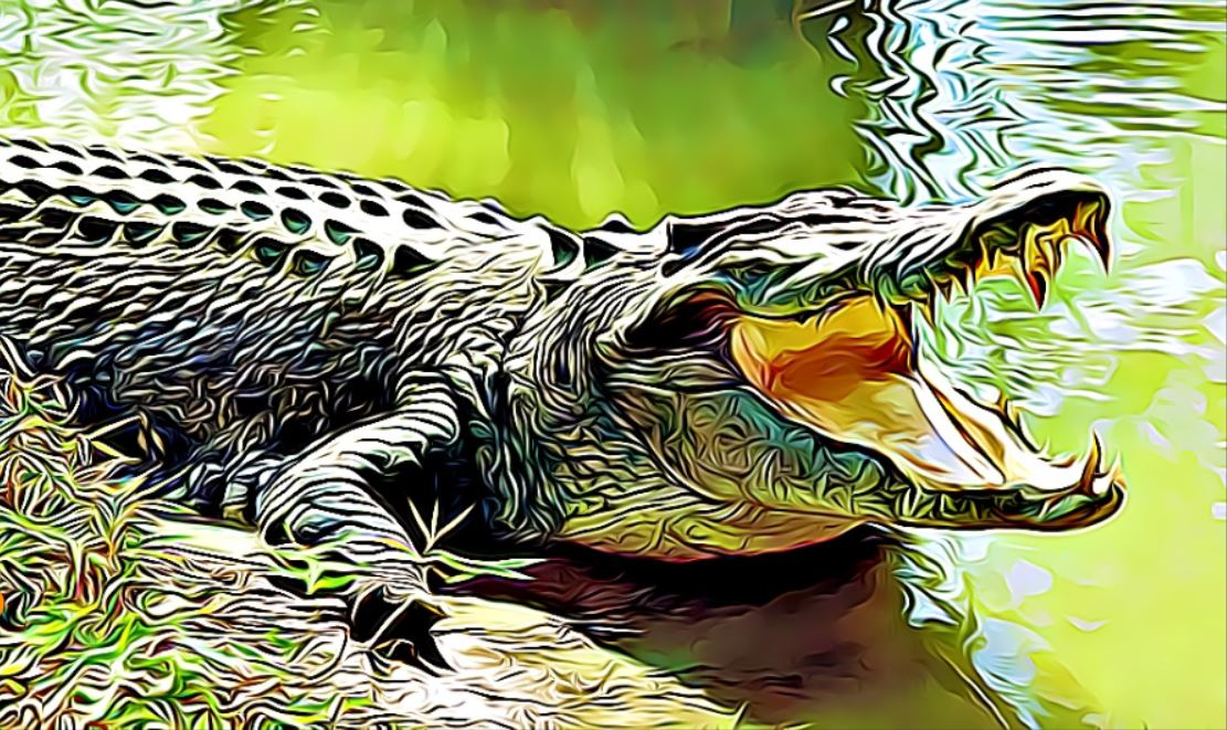 10 características de los cocodrilos