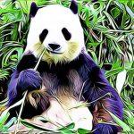 10 caracteristicas de los osos panda