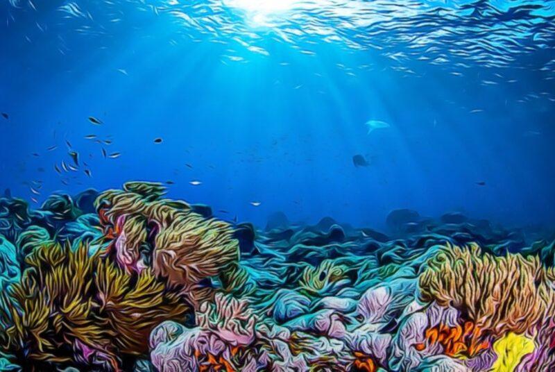 Fondo de corales en aguas del océano