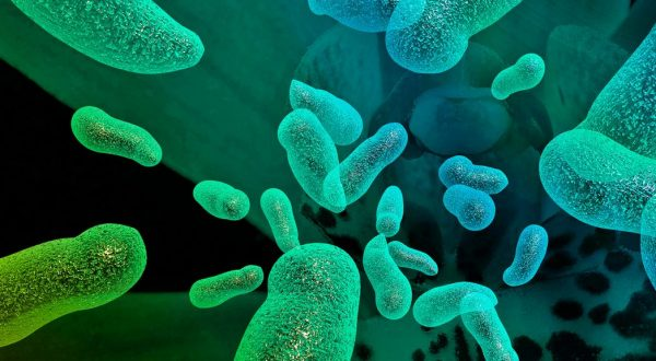 10 características de las bacterias