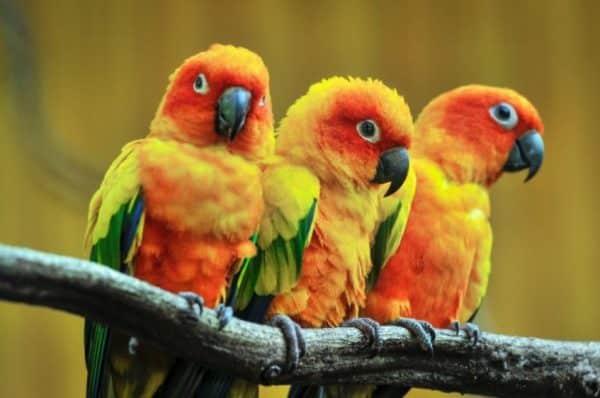 características de las aves o pájaros