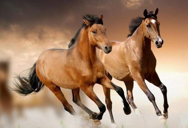 características de los caballos