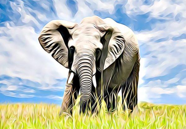 características de los elefantes