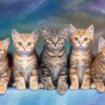características de los gatos