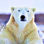 características de los osos polares