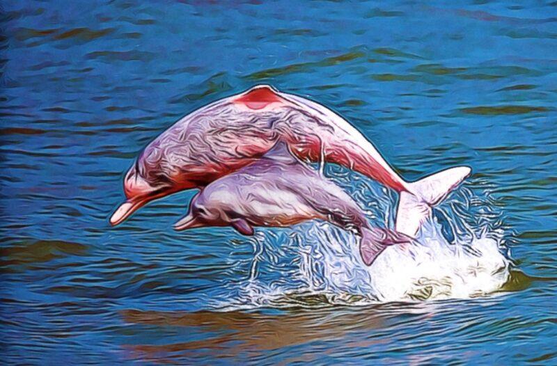 delfin rosado saltando en el mar