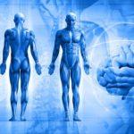 características biológicas del ser humano